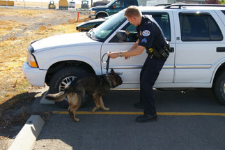 Police dog working